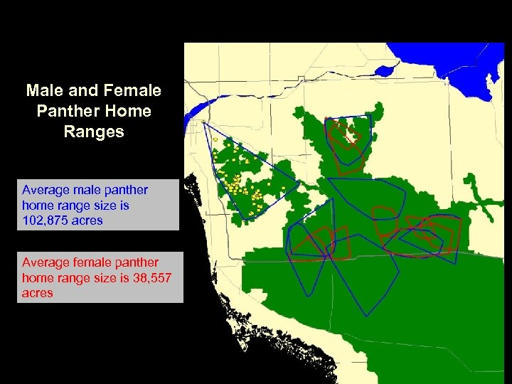 Male and Female Panther Home Ranges Average male panther home range size is 102,