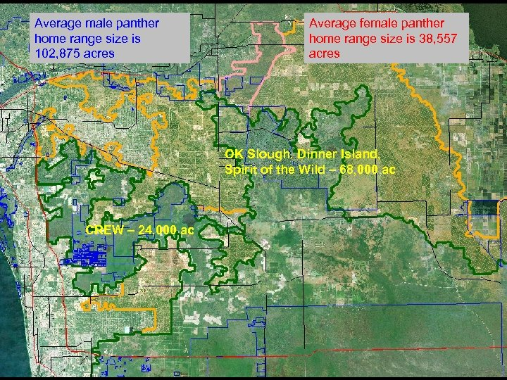 Average male panther home range size is 102, 875 acres Average female panther home