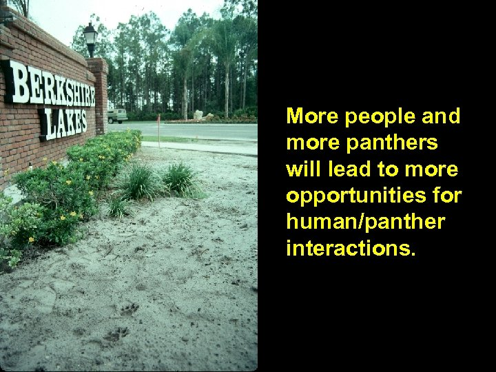 More people and more panthers will lead to more opportunities for human/panther interactions.