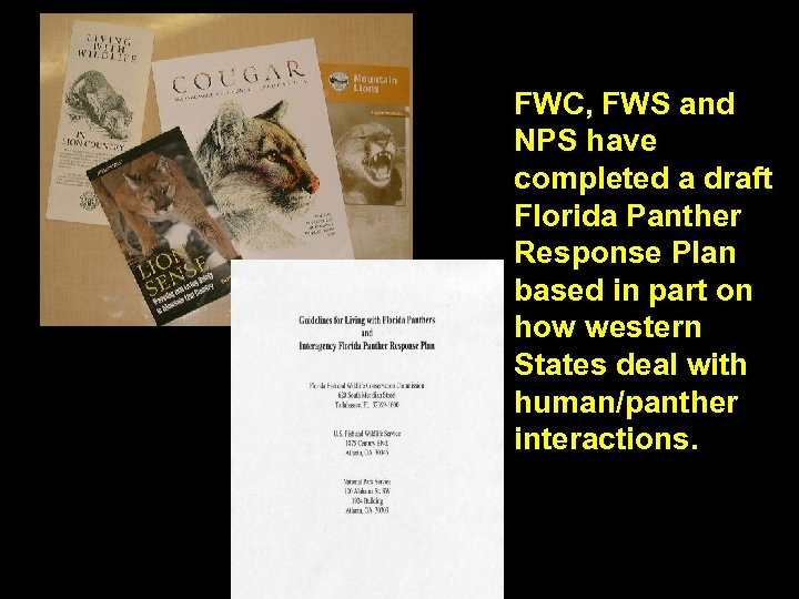 FWC, FWS and NPS have completed a draft Florida Panther Response Plan based in