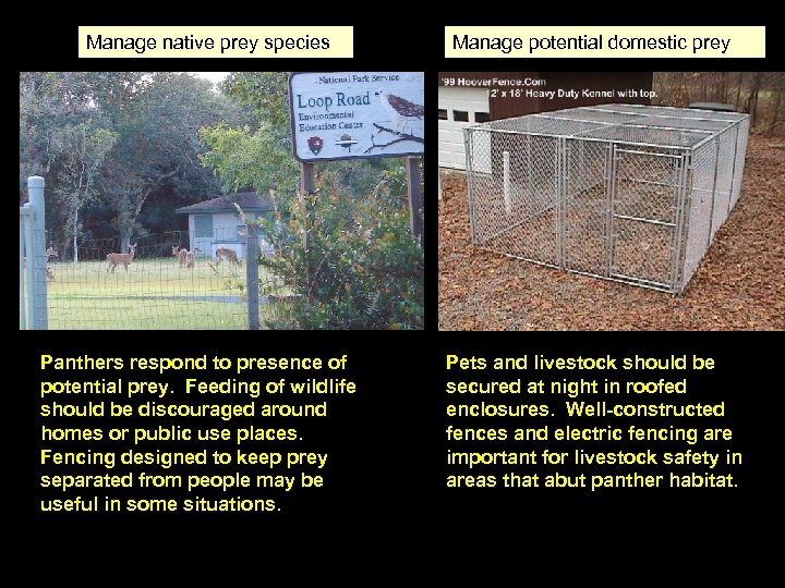 Manage native prey species Panthers respond to presence of potential prey. Feeding of wildlife