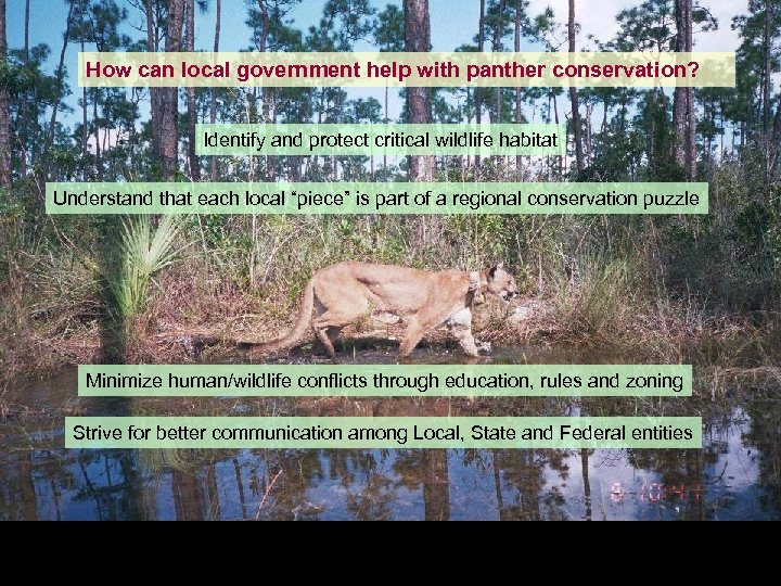 How can local government help with panther conservation? Identify and protect critical wildlife habitat