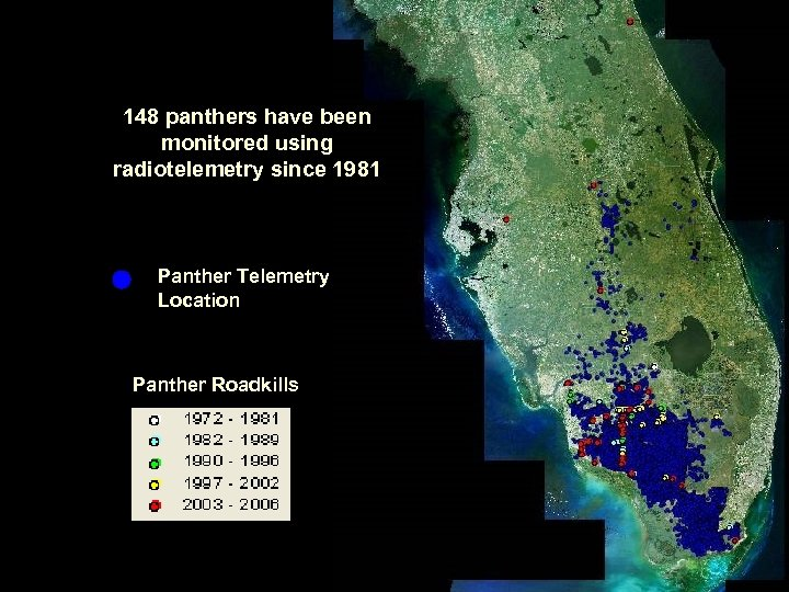 148 panthers have been monitored using radiotelemetry since 1981 Panther Telemetry Location Panther Roadkills