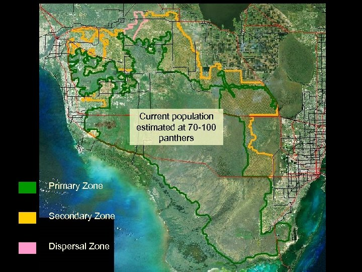 Current population estimated at 70 -100 panthers Primary Zone Secondary Zone Dispersal Zone