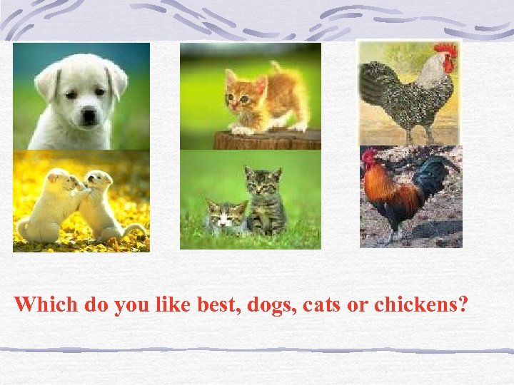 Which do you like best, dogs, cats or chickens?