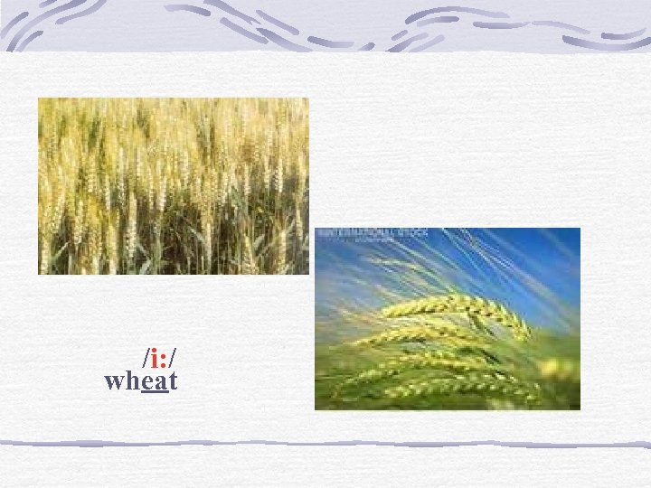 /i: / wheat