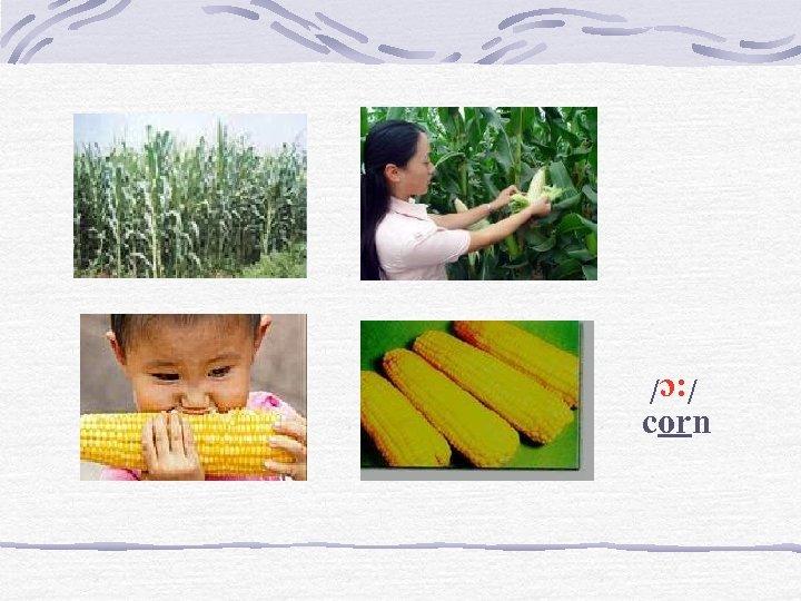 /: c/ corn