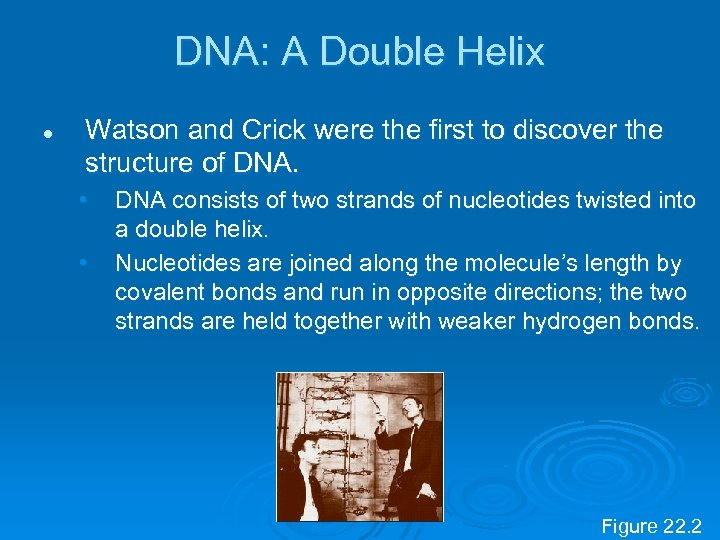 DNA: A Double Helix l Watson and Crick were the first to discover the