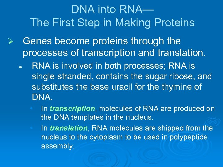 DNA into RNA— The First Step in Making Proteins Genes become proteins through the