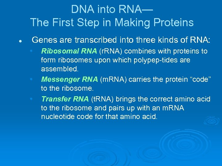 DNA into RNA— The First Step in Making Proteins l Genes are transcribed into