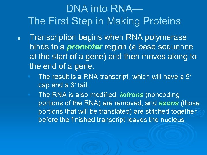 DNA into RNA— The First Step in Making Proteins l Transcription begins when RNA
