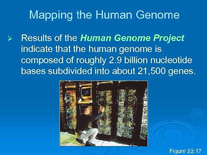 Mapping the Human Genome Ø Results of the Human Genome Project indicate that the