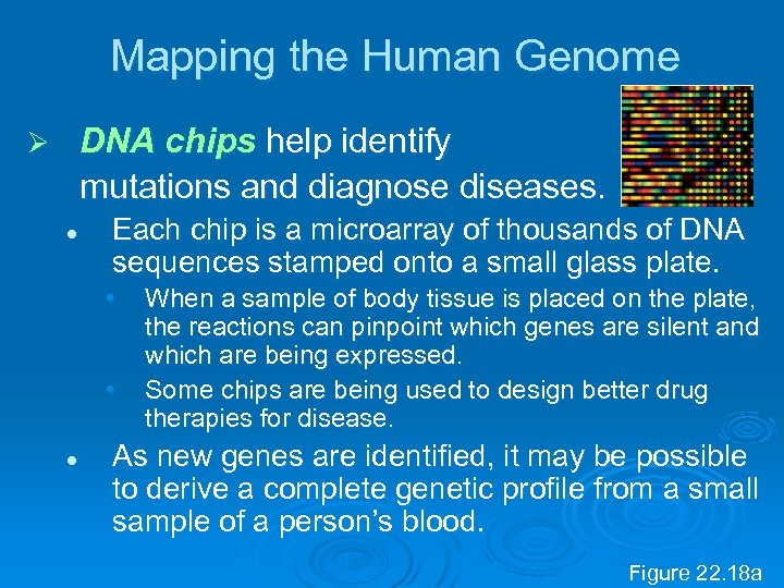 Mapping the Human Genome DNA chips help identify mutations and diagnose diseases. Ø l