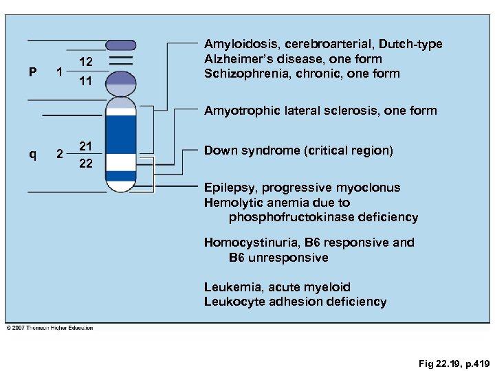P 1 12 11 Amyloidosis, cerebroarterial, Dutch-type Alzheimer's disease, one form Schizophrenia, chronic, one