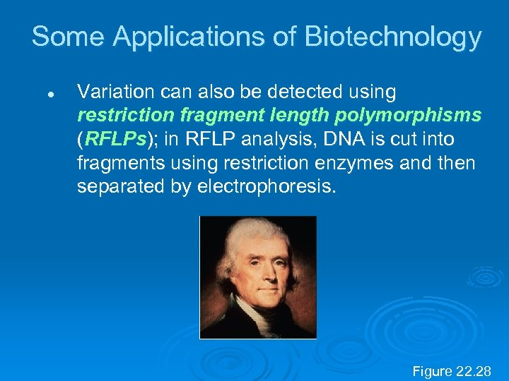 Some Applications of Biotechnology l Variation can also be detected using restriction fragment length