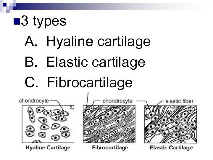 n 3 types A. Hyaline cartilage B. Elastic cartilage C. Fibrocartilage