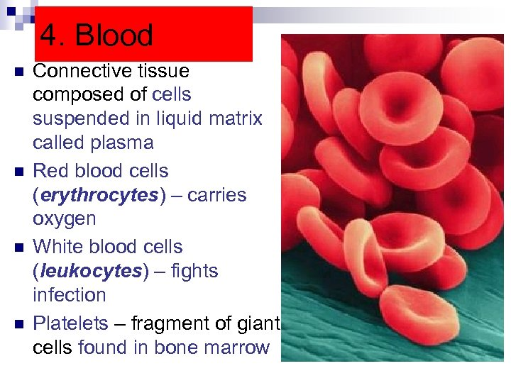 4. Blood n n Connective tissue composed of cells suspended in liquid matrix called
