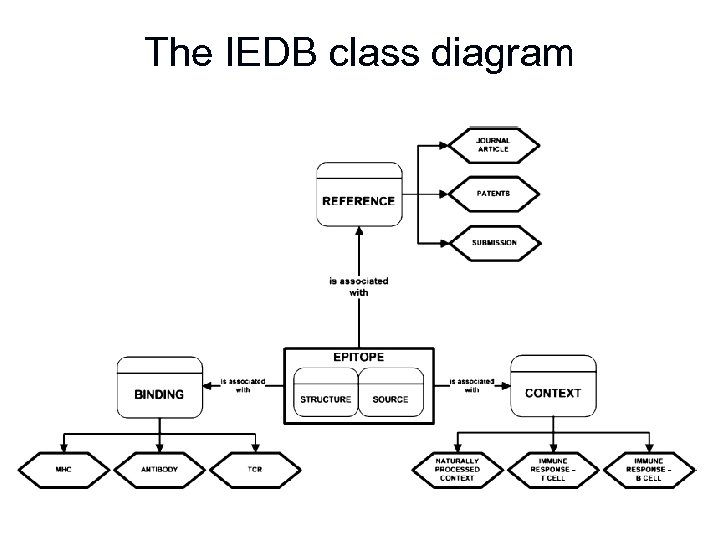 The IEDB class diagram