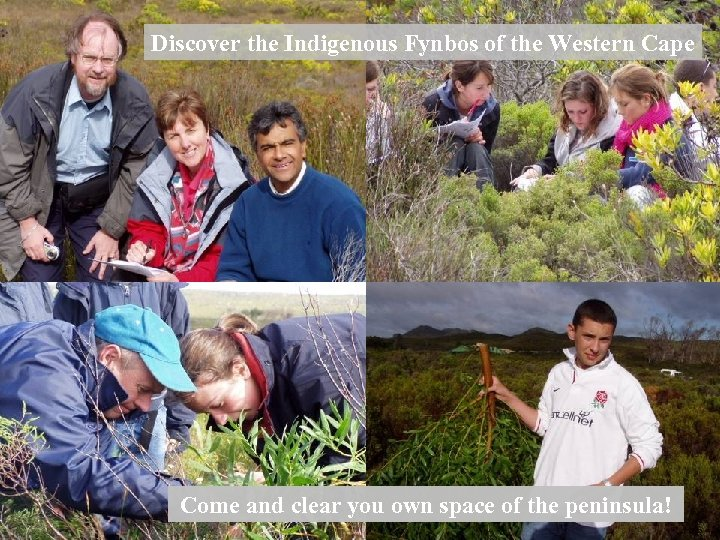Discover the Indigenous Fynbos of the Western Cape Point Come and clear you own