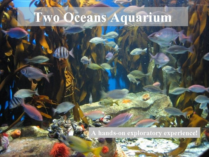 Two Oceans Aquarium A hands-on exploratory experience!