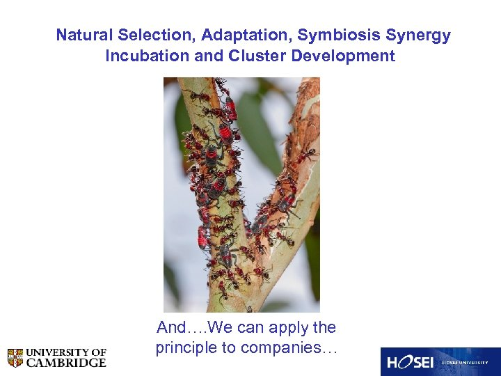 Natural Selection, Adaptation, Symbiosis Synergy Incubation and Cluster Development And…. We can apply the