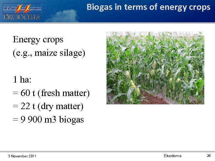 Biogas in terms of energy crops Energy crops (e. g. , maize silage) 1
