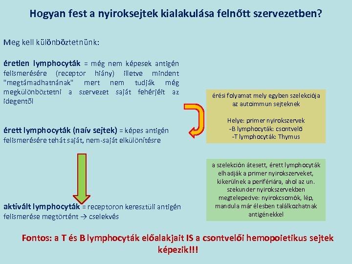 Hogyan fest a nyiroksejtek kialakulása felnőtt szervezetben? Meg kell különböztetnünk: éretlen lymphocyták = még