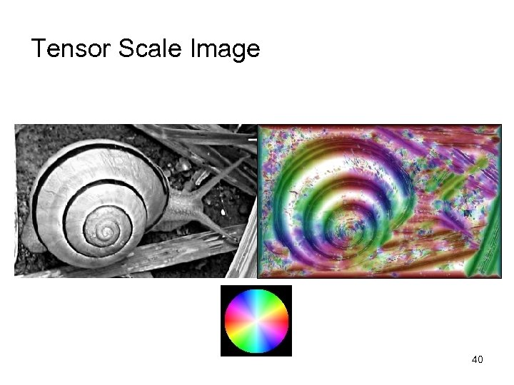 Tensor Scale Image 40