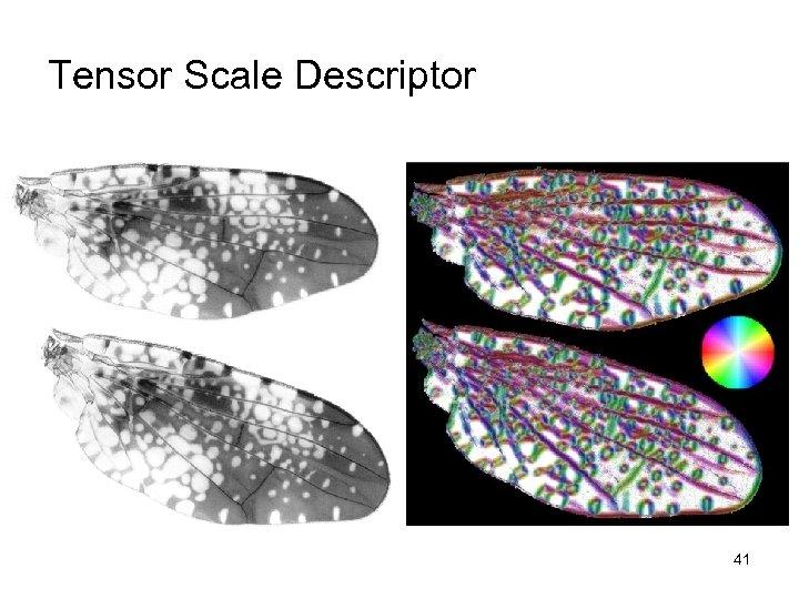 Tensor Scale Descriptor 41