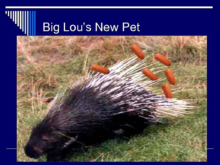 Big Lou's New Pet Sent in by Lachlan