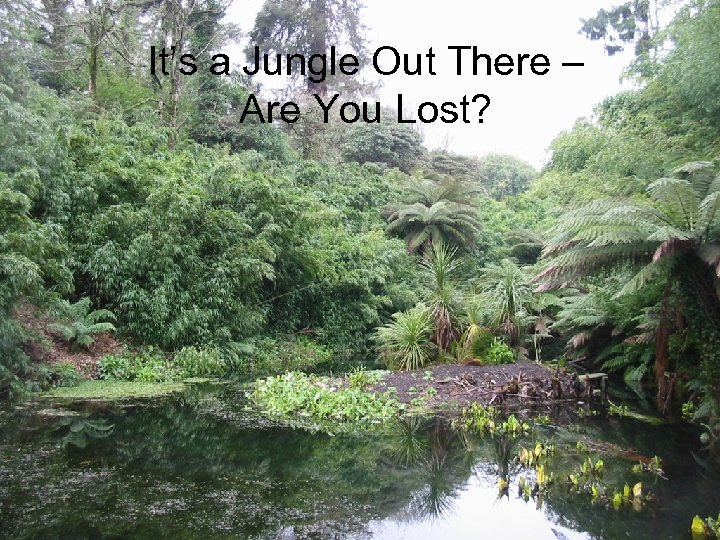 It's a Jungle Out There – Are You Lost?