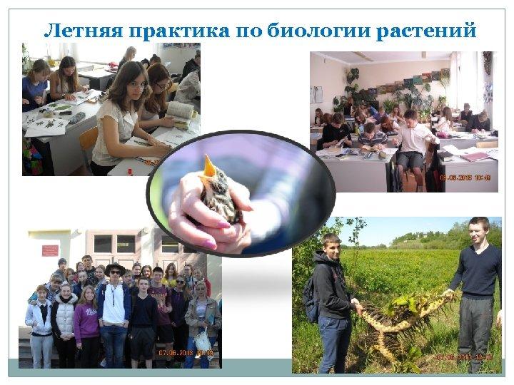 Летняя практика по биологии растений