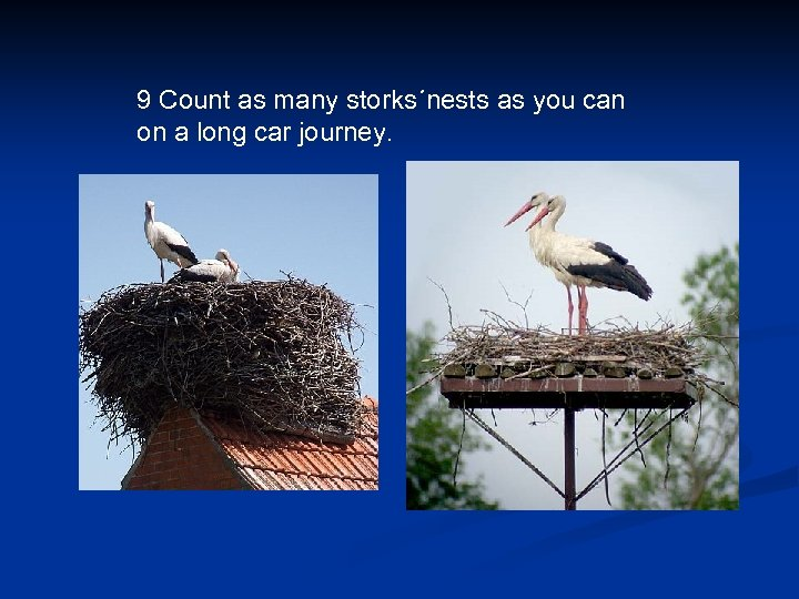 9 Count as many storks´nests as you can on a long car journey.