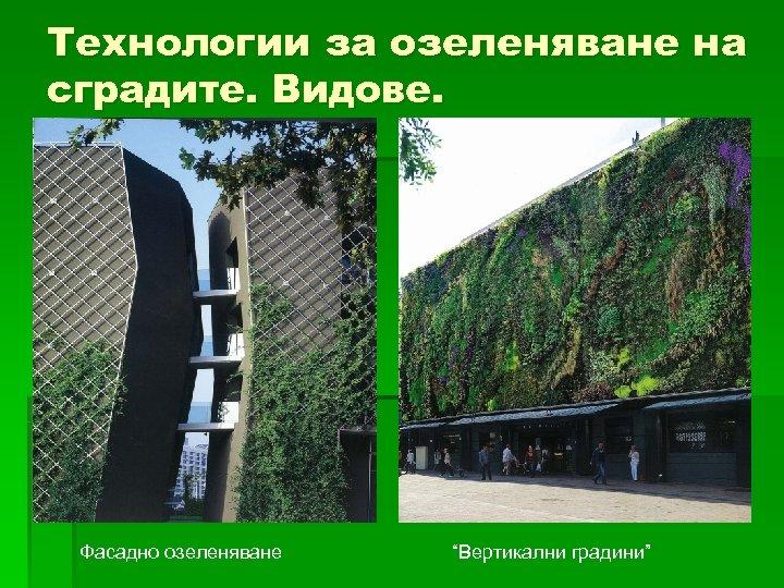 """Технологии за озелeняване на сградите. Видове. Фасадно озеленяване """"Вертикални градини"""""""