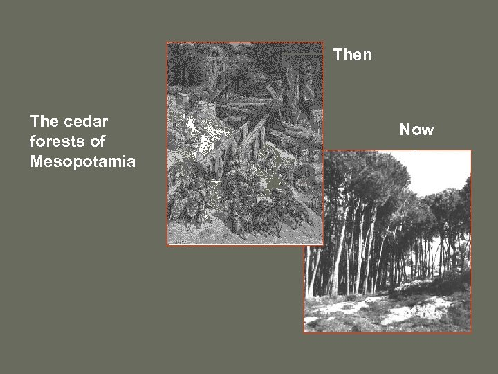 Then The cedar forests of Mesopotamia Now