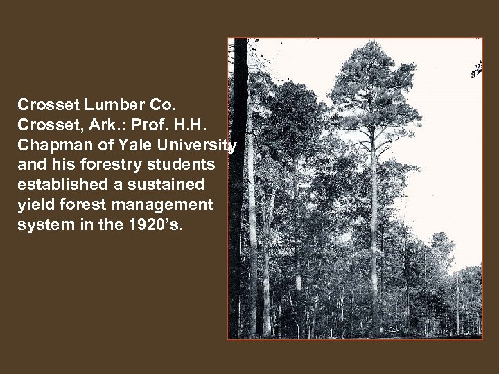 Crosset Lumber Co. Crosset, Ark. : Prof. H. H. Chapman of Yale University and
