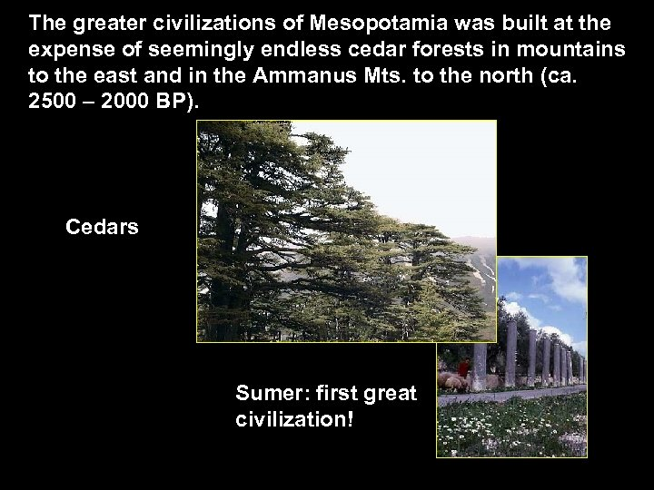 The greater civilizations of Mesopotamia was built at the expense of seemingly endless cedar