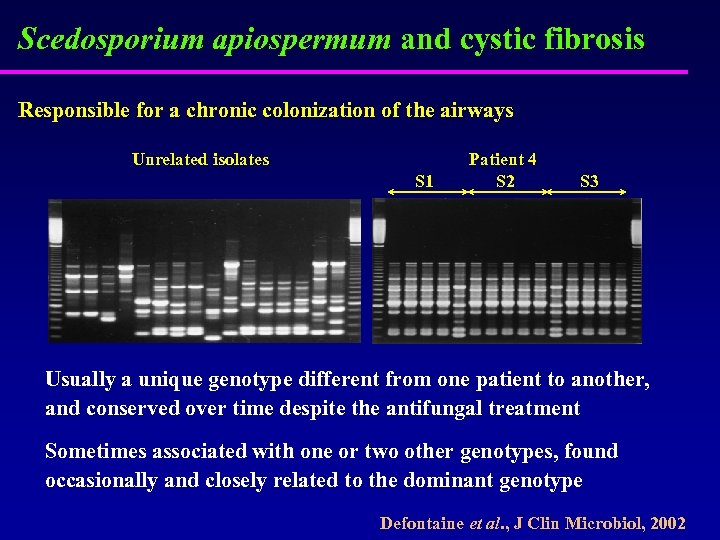 Scedosporium apiospermum and cystic fibrosis Responsible for a chronic colonization of the airways Unrelated