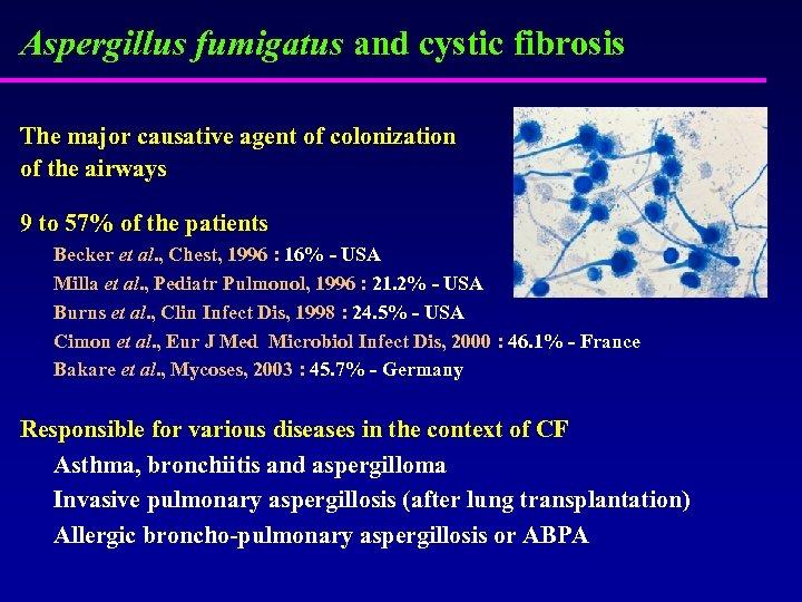 Aspergillus fumigatus and cystic fibrosis The major causative agent of colonization of the airways
