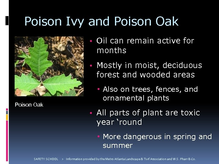 Poison Ivy and Poison Oak • Oil can remain active for months • Mostly