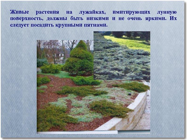 Живые растения на лужайках, имитирующих лунную поверхность, должны быть низкими и не очень яркими.