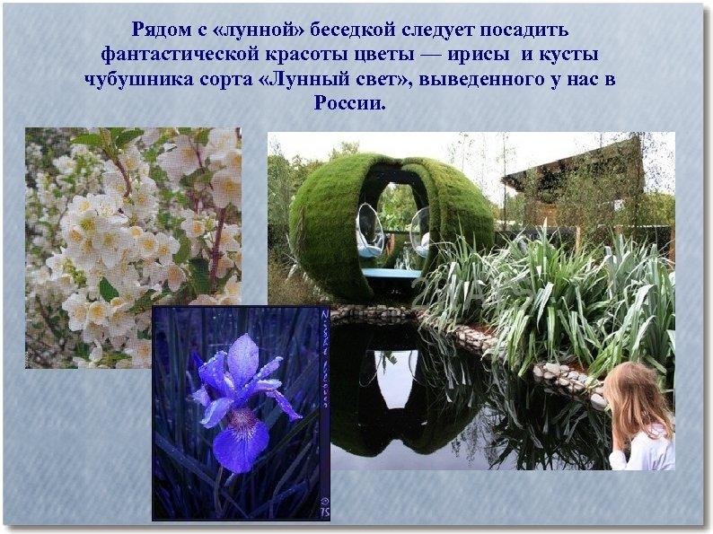Рядом с «лунной» беседкой следует посадить фантастической красоты цветы — ирисы и кусты чубушника