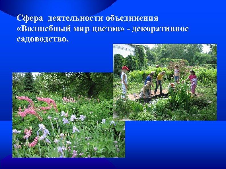 Сфера деятельности объединения «Волшебный мир цветов» - декоративное садоводство.