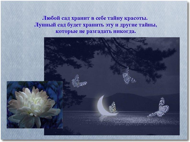 Любой сад хранит в себе тайну красоты. Лунный сад будет хранить эту и другие