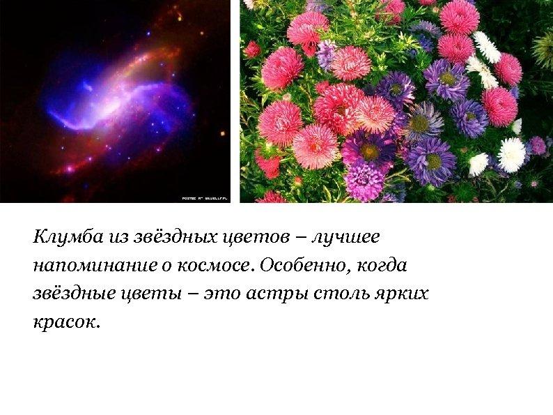 Клумба из звёздных цветов – лучшее напоминание о космосе. Особенно, когда звёздные цветы –