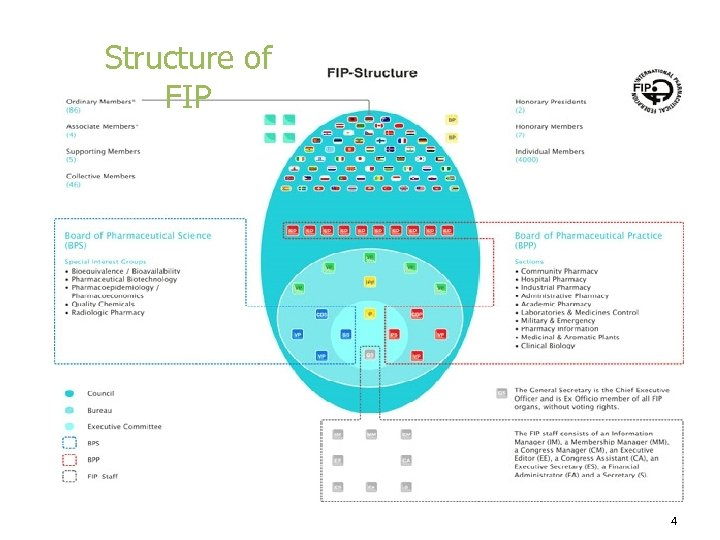 Structure of FIP 4