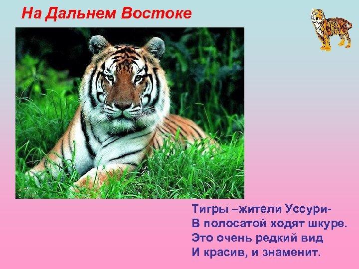 На Дальнем Востоке Тигры –жители Уссури. В полосатой ходят шкуре. Это очень редкий вид
