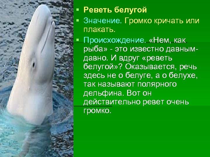 § § Реветь белугой Значение. Громко кричать или плакать. § Происхождение. «Нем, как рыба»
