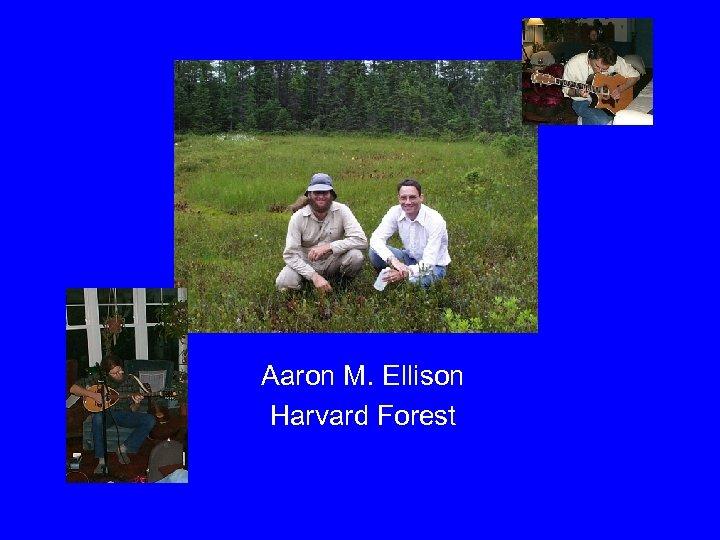 Aaron M. Ellison Harvard Forest