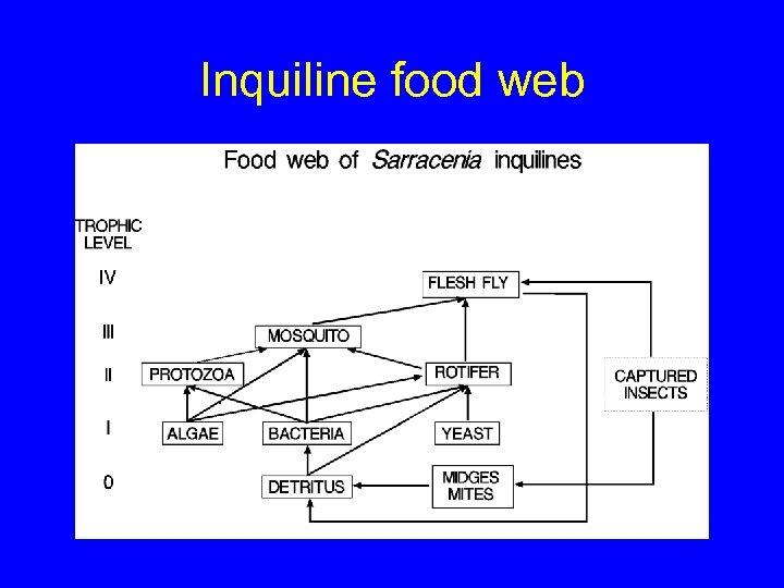 Inquiline food web